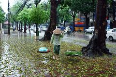 Dự báo thời tiết 16/9, Hà Nội mưa rào giảm nhiệt