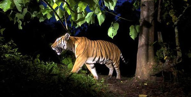Endangered species decline as wildlife trafficking continues