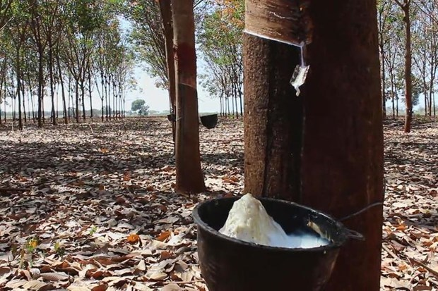 DTN: Thailand becomes world's biggest rubber exporter