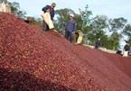 Vietnam's coffee exports plummet in eight months