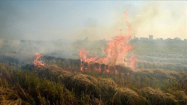 Haze from burning straw affects Noi Bai Airport