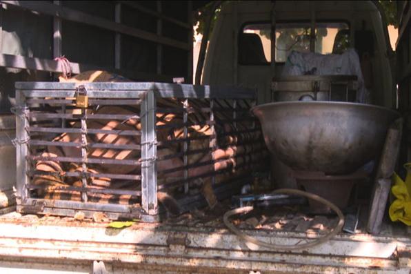 Hổ 240kg còn sống trên đường từ Nghệ An ra Quảng Ninh nấu cao