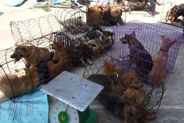 Chiếc hầm bí mật trong đường dây trộm hơn 100 tấn chó ở Thanh Hóa