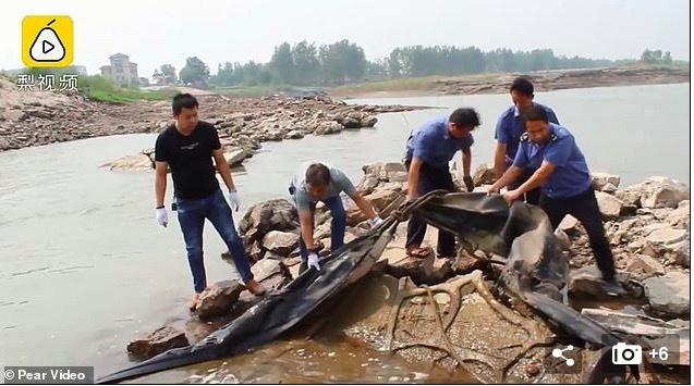sinh vật bí ẩn,quái vật hồ Loch Ness,Trung Quốc