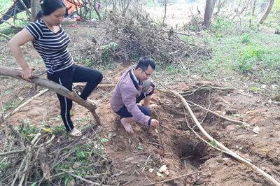Gia Lai: Xôn xao tin đồn người dân tìm được gỗ sưa tiền tỷ