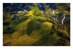 Terraced rice fields in Mu Cang Chai turn yellow