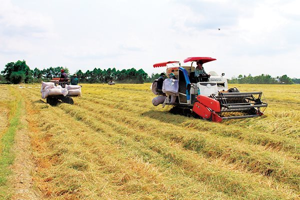 Vietnam's rice exports to Philippines up, but farmers aren't happy