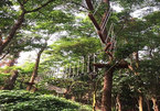 Fun and games in the trees in Quang Binh
