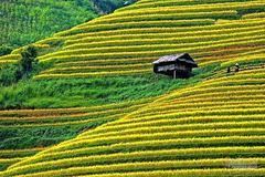Cảnh sắc đẹp nhất thế giới mỗi năm 1 lần chỉ có ở Việt Nam