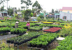 Vietnam's Mekong Delta agriculture adapts to climate change