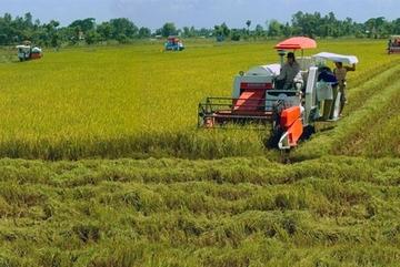 Rice exports bring $2.24 billion for Vietnam in nine months