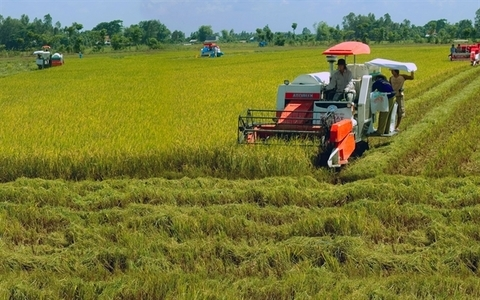 Vietnamese rice industry needs technology in preservation and processing