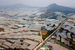 Greenhouse expansion damaging Da Lat environment