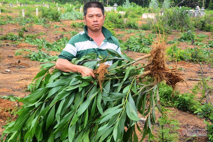 Phó chủ tịch xã đùng đùng dẫn đoàn đi 'bức tử' hàng ngàn cây keo rồi nhận sai