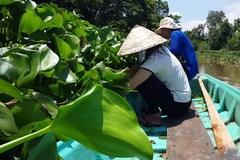 Chuyện lạ Hậu Giang: Dân bỏ rau nhút quay ra trồng... bèo dại
