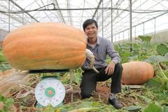 Quả bí ngô siêu to khổng lồ nhất Việt Nam: Nặng 126,6kg, cao 1,2m
