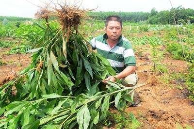 Phó chủ tịch xã dẫn đoàn đi 'bức tử' 3.000 cây keo, Chủ tịch cam kết đền đủ