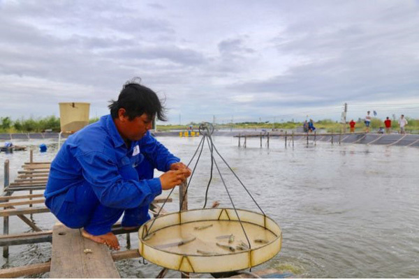 Mekong Delta shrimp farmers take baby steps towards renewable energy
