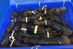 Nghe tin tôm hùm Alaska 170 ngàn/kg, dân đổ xô đi mua mới… 'ngã ngửa'