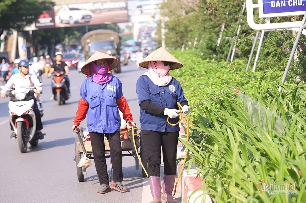 Hanoi's red maple trees project a failure