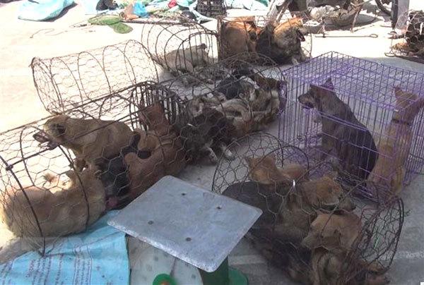 Thanh Hoa dog-theft ring under investigation