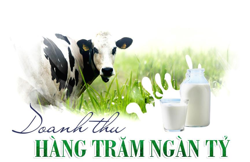 bò sữa,trang trại bò,tỷ phú nông dân,chăn nuôi bò sữa,Nông trường Mộc Châu,làng tỷ phú