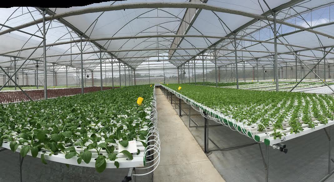 Tay trắng dựng nghiệp, nuôi lươn thu 9 tỷ, trồng dưa gom 5 tỷ