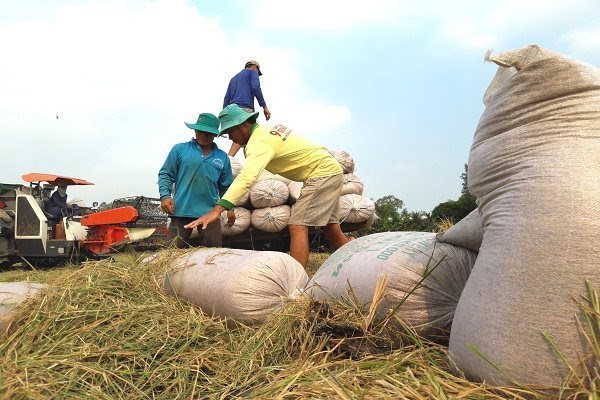 Thailand's rice subsidy program may affect Vietnam: rice operators