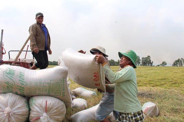 China no longer largest buyer of Vietnam rice
