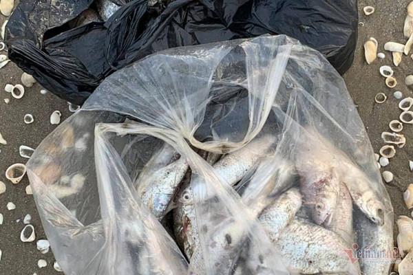 Cá chết trôi dạt gần 4km bờ biển Hà Tĩnh