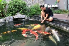 Đàn cá Koi bạc tỷ 'độc nhất vô nhị' Việt Nam của đại gia TP.HCM