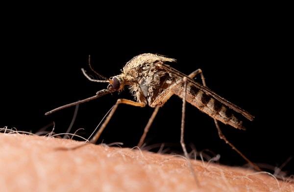 Giải pháp mới ngăn chặn tình trạng sốt rét kháng thuốc
