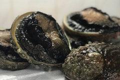 Đặc sản bào ngư viền đen có giá tiền triệu mà không dễ mua