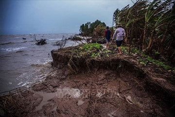 Ca Mau Province takes steps to prevent erosion