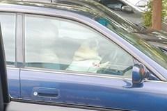 Chó cưng bấm còi xe ô tô giục chủ vì ra ngoài quá lâu