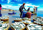 Vietnam's seafood falls in grades because of IUU yellow card