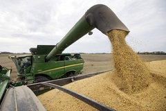 Ông Trump đấu rát với TQ, nông dân Mỹ khốn đốn