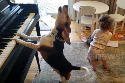 """Chú chó gây kinh ngạc, vừa tự chơi piano vừa """"hát"""""""