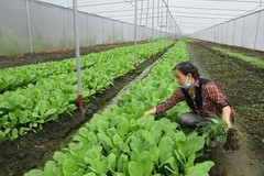 Difficulty in land access hinders 4.0 agriculture in Vietnam