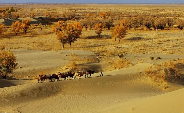 Đường cao tốc giữa sa mạc lớn nhất Trung Quốc dài 136 km