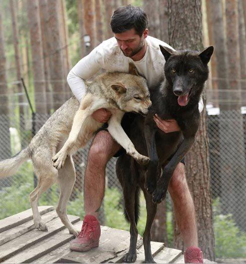 Cuộc sống giữa bầy sói của người đàn ông