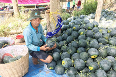 """Anh nông dân giúp cả xóm thoát nghèo bằng mô hình """"2 lúa, 1 màu"""""""