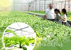 Vườn rau không cần đất, anh nông dân đếm đủ 9 tỷ đồng/ha