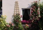 Rung động với vườn hồng rộng, đẹp như trong truyện cổ tích của mẹ Việt tại Đức
