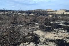 140ha rừng phi lao bị đốt, chặt: Bình Định tạm dừng nhà máy phong điện