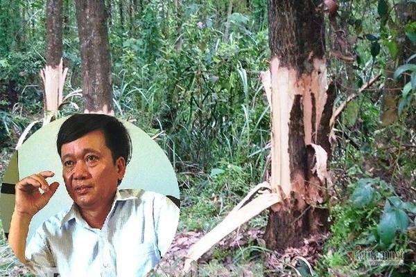 Bí thư xã ở Thừa Thiên Huế chỉ đạo gọt chết cây của dân xin thôi chức