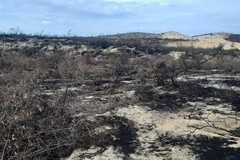 Binh Dinh wind power project halted to following deforestation