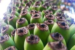 Buồng chuối hơn 120 nải, dài 2,5 m ở Quảng Ngãi
