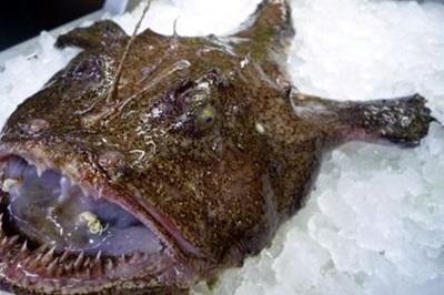 Con cá xấu như quỷ, răng sắc nhọn ghê người mà giá hơn 1 triệu/kg