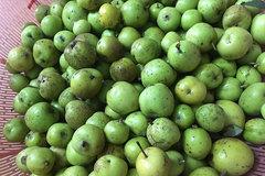 Nhờ trồng táo sơn tra trên vùng núi Bắc Yên, không còn quanh năm thiếu đói